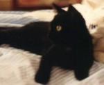 """""""Le gatte torinesi"""", soprannominate Cricchi (la nera) e Pendi (la bianca), in un'insolita, elegante postura sincronizzata. Per il resto botte da orbi."""