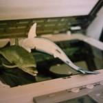 """Un delfino e uno squalo, ripassati alla fotocopiatrice, fra gli interpreti di """"Cortomiraggi""""."""
